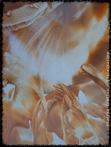 Gouden-vleugels